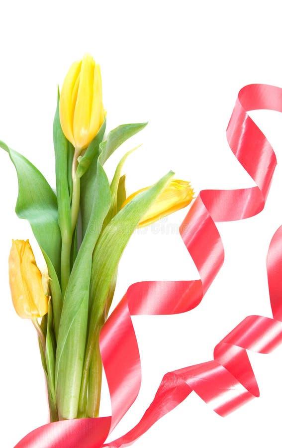 Schöne Frühlingsblumen lizenzfreies stockfoto