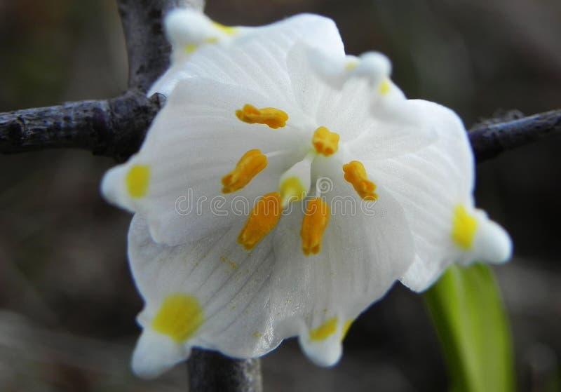 Schöne Frühlingsblumen nach Winterschlaf stockbilder