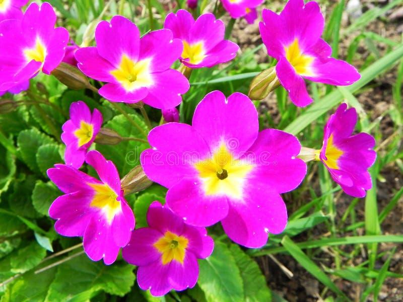 Schöne Frühlingsblumen nach Winterschlaf stockbild