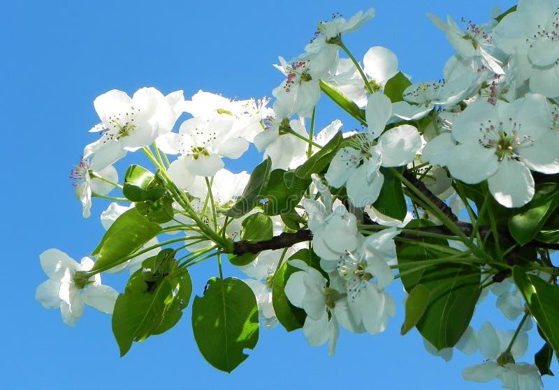 Schöne Frühlingsblumen nach Winterschlaf stockfoto