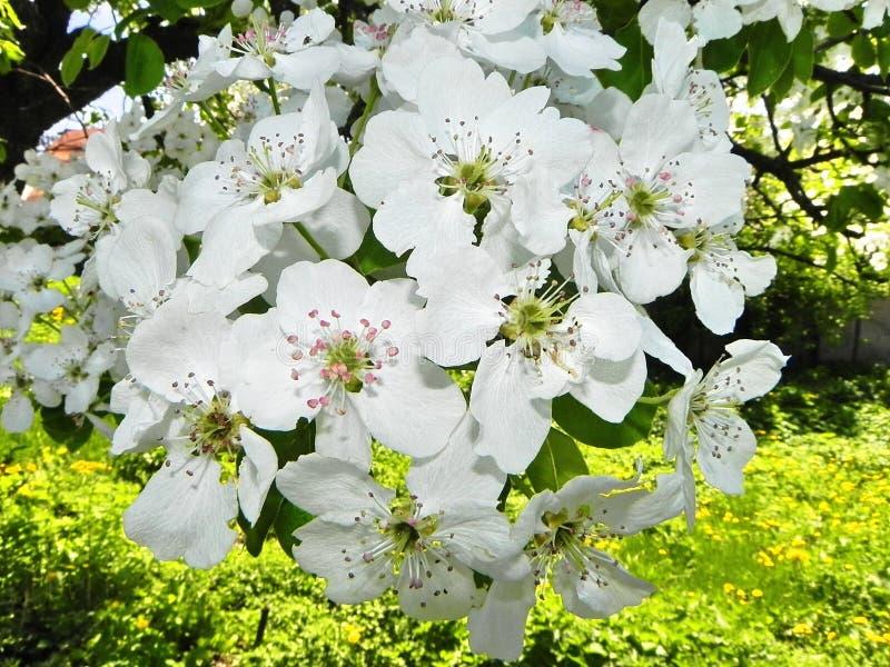 Schöne Frühlingsblumen nach Winterschlaf lizenzfreie stockfotos