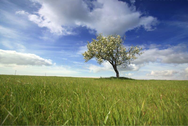 Schöne Frühlingslandschaft mit einsamem Baum lizenzfreies stockfoto