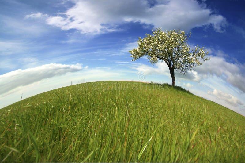Schöne Frühlingslandschaft mit einsamem Baum lizenzfreie stockfotografie