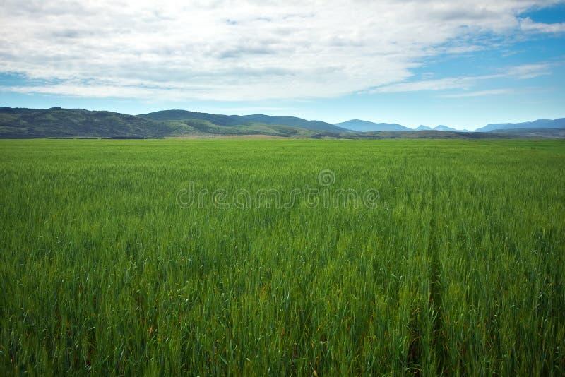 Schöne Frühlingslandschaft mit grünem Feld und blauem bewölktem stockfotografie