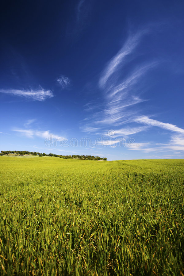 Schöne Frühlingslandschaft mit Gras und Himmel stockbild