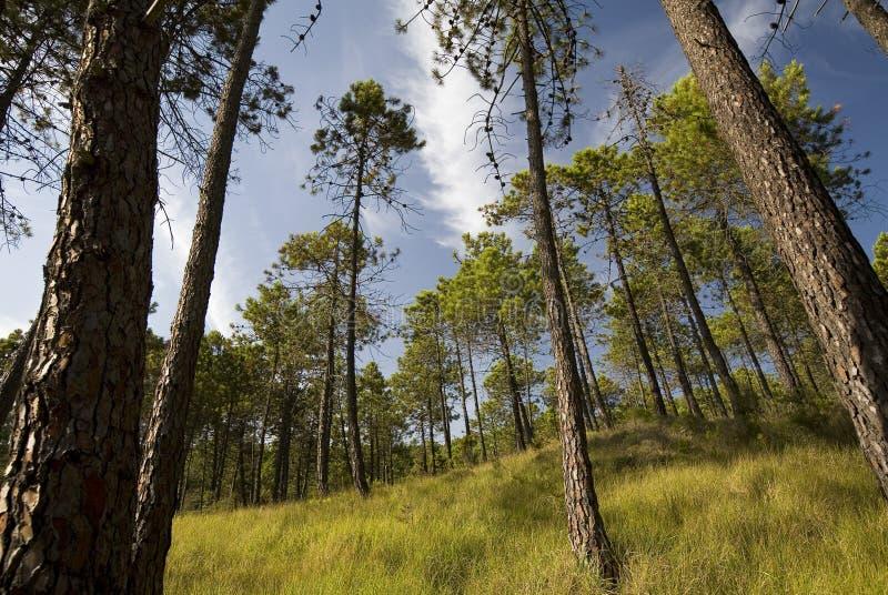 Schöne Frühlingswaldlandschaft stockfotografie