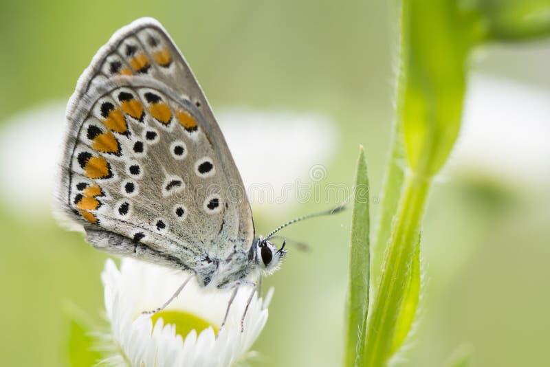 Schöne Frühlingswiese mit Schmetterlingshintergrund stockbild