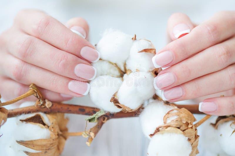 Schöne französische Maniküre und Baumwollblume lizenzfreies stockfoto