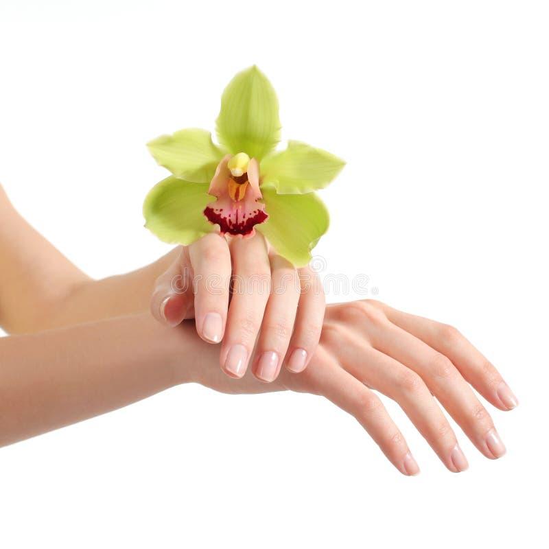 Schöne Frauenhände mit Maniküre und einer grünen Orchidee lizenzfreies stockfoto
