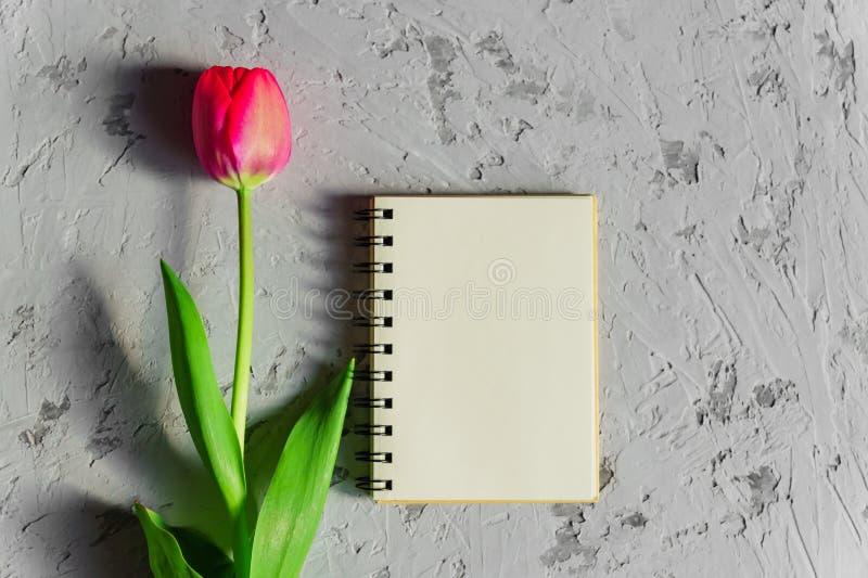 Schöne frisch geschnittene rosa Tulpe und leeres leeres spyral Anmerkungsbuch auf grauem konkretem Hintergrund Spott oben mit Kop stockbild