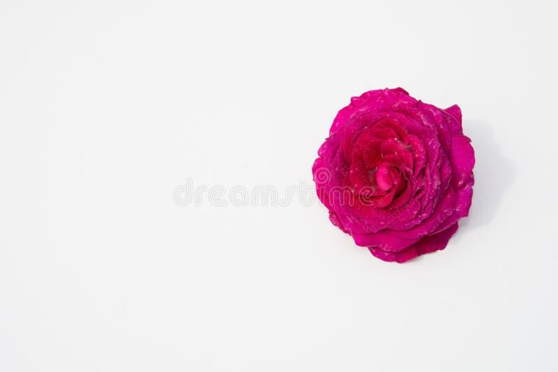 Schöne frische Blumen Weichheit und angenehmer Geruch Foto mit natürlicher Leuchte und schönem bokeh lizenzfreie stockfotografie