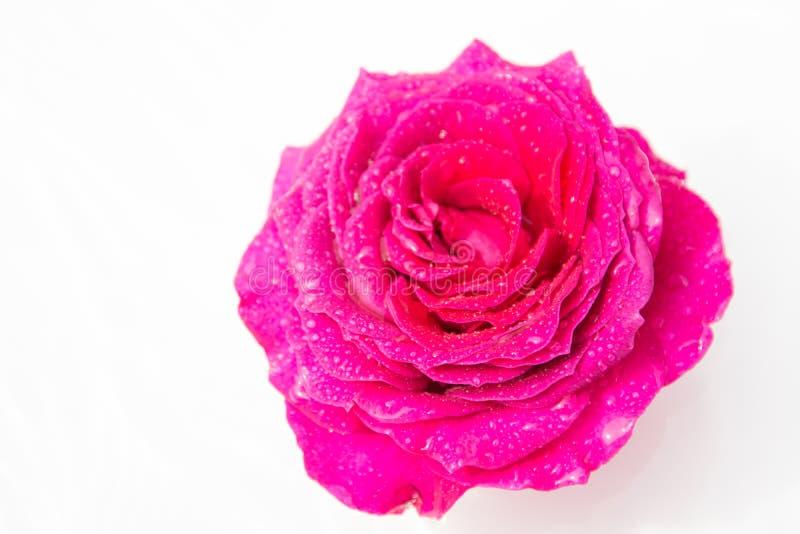 Schöne frische Blumen Weichheit und angenehmer Geruch Foto mit natürlicher Leuchte und schönem bokeh stockbild