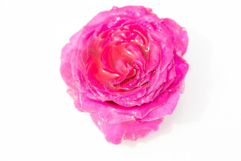 Schöne frische Blumen Weichheit und angenehmer Geruch Foto mit natürlicher Leuchte und schönem bokeh stockfotos