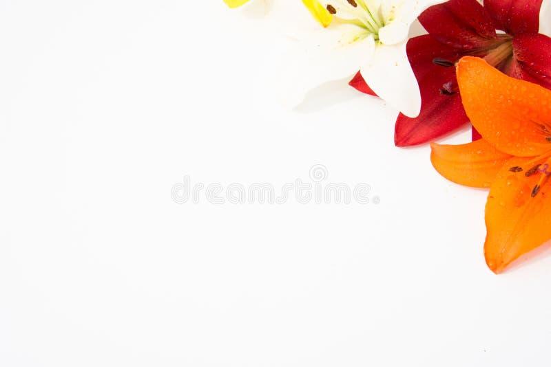 Schöne frische Blumen Weichheit und angenehmer Geruch Garten-Lilien stockfoto