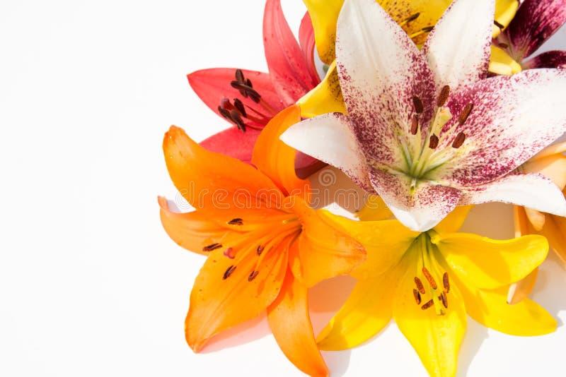 Schöne frische Blumen Weichheit und angenehmer Geruch Garten-Lilien lizenzfreie stockfotos