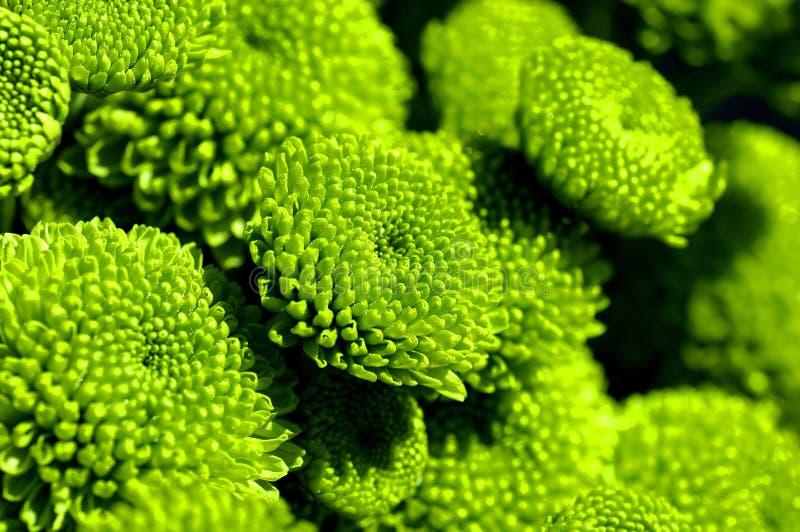 Grüne Blumen stockbilder