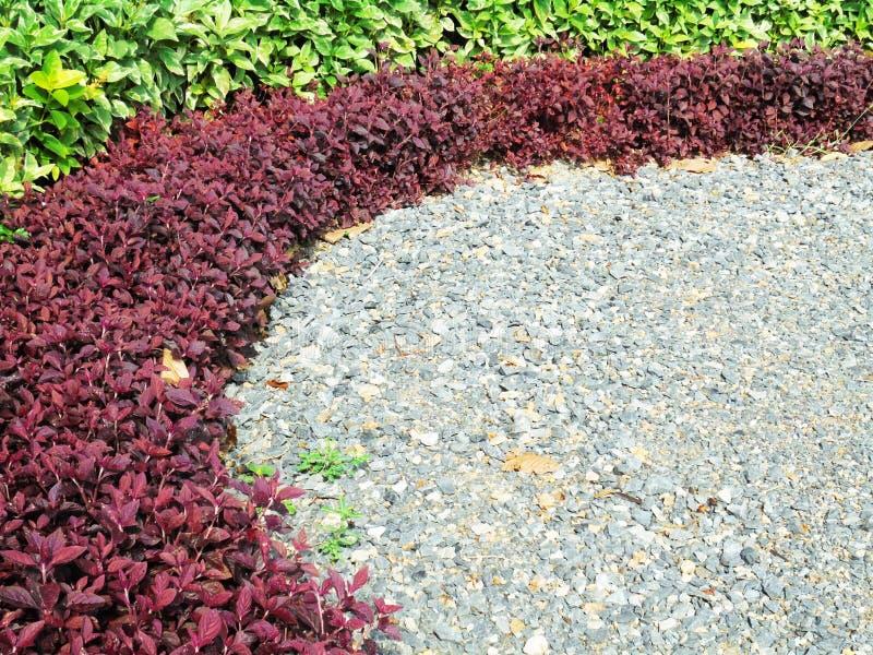 Schöne Garten-, Farbblatt-, Rot- Und Grünblätter Stockfoto - Bild ...