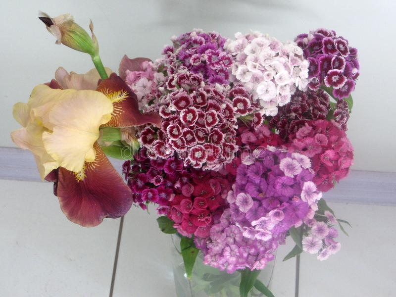 Schöne Gartennelke blüht in einem Vase auf einer Tabelle Blumenstrauß der violetten, purpurroten und rosa Mehrfarbenblume Dekorat lizenzfreies stockfoto