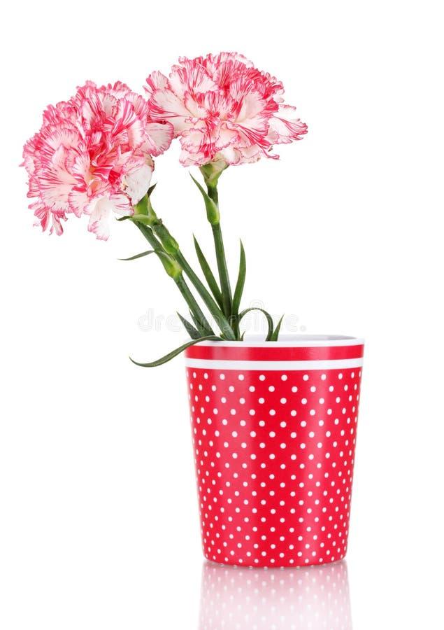 Schöne Gartennelken im roten Cup lizenzfreie stockfotos