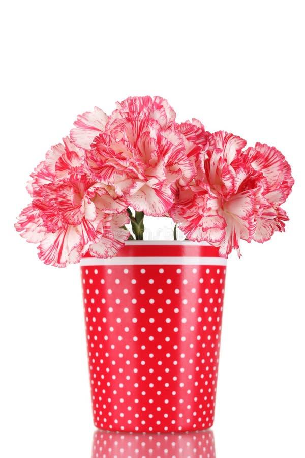 Schöne Gartennelken im roten Cup stockfoto