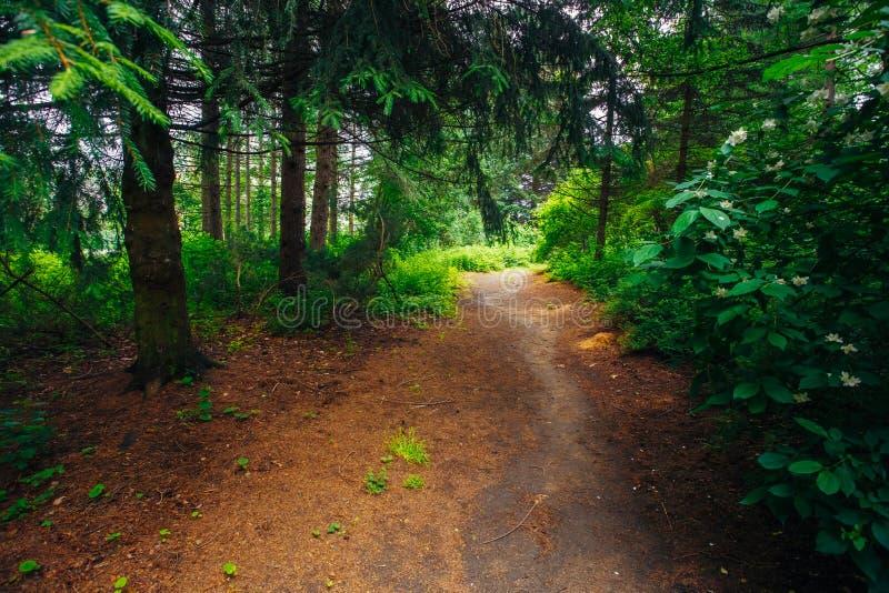Schöne Gasse im Park Garten-Landschaftsgestaltungsdesign stockfotografie