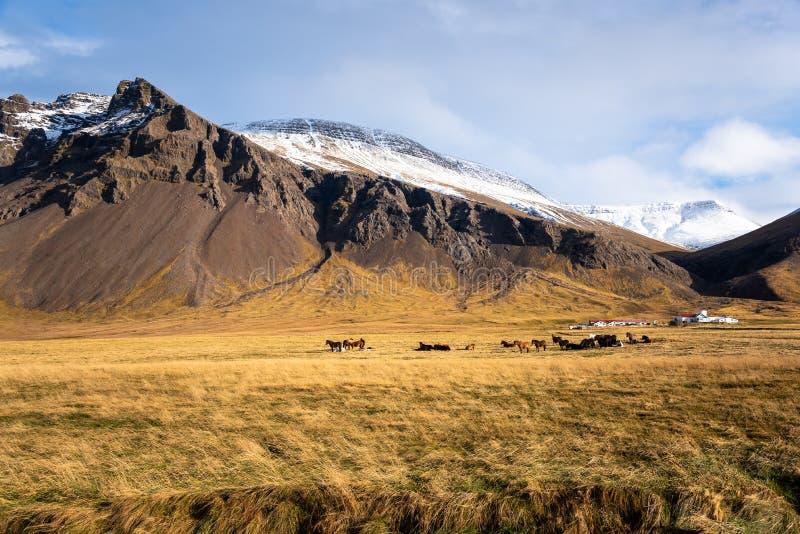 Schöne Gebirgslandschaft in Island mit Pferden auf einem grasartigen Gebiet stockfotos