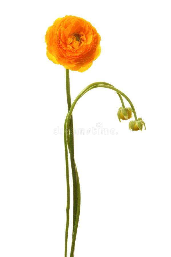 Schöne gelbe Blume stockfotos