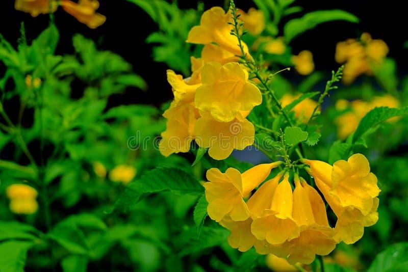 Schöne gelbe Blume im Garten stockbild