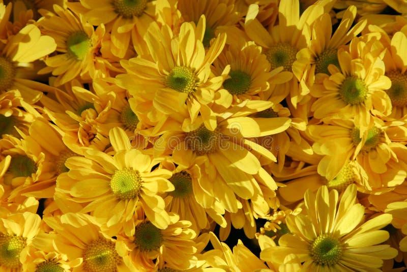 Schöne gelbe Blumen lizenzfreie stockbilder