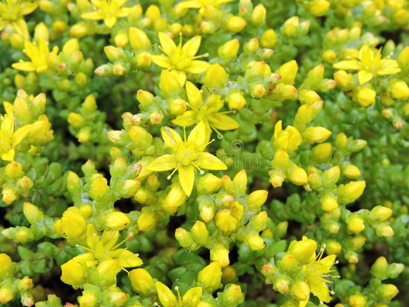 Schöne gelbe Blumen stockbild