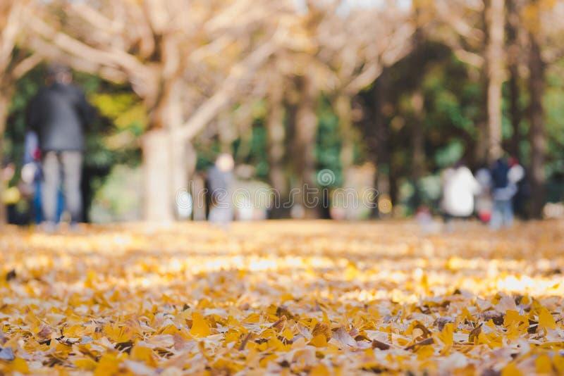 Schöne gelbe ginko Blätter im Park mit unscharfer Familie genießen Ausflug im Park, Herbst stockbilder