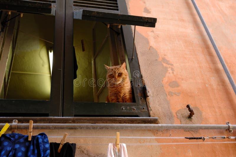 Schöne gelbe Katze, die heraus vom Fenster schaut stockfotos