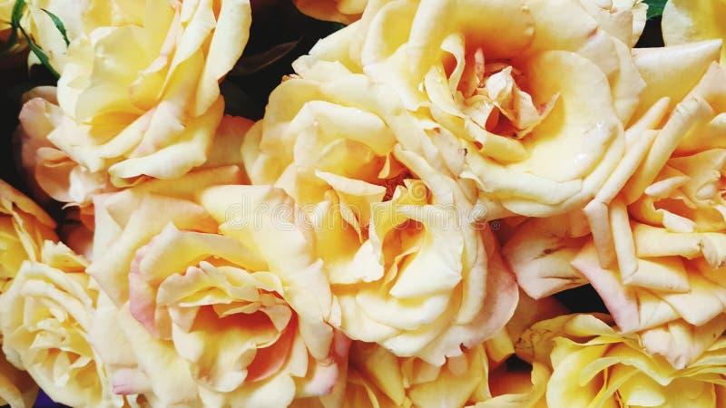 Schöne gelbe rosafarbene Blume für Valentinsgrußtag oder -Hochzeit lizenzfreies stockbild