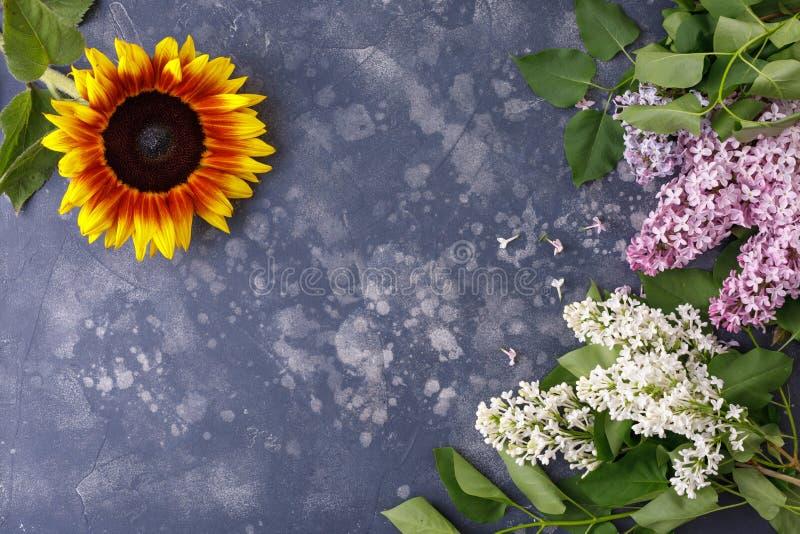 Schöne, gelbe Sonnenblume und Flieder auf einem schwarzen Hintergrund, Draufsicht, Nahaufnahme Feld der Blumen Ein interessantes, stockbilder
