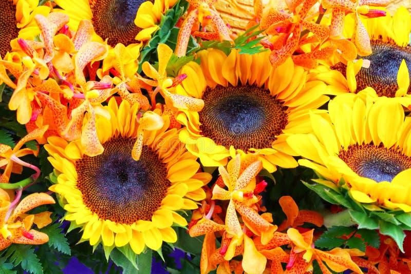 Schöne gelbe Sonnenblumengruppe mit der hellorangeen Orchidee, Pastell, schön in der Natur lizenzfreie stockfotografie