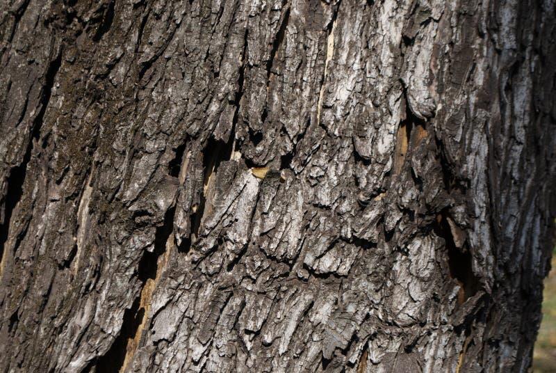 Schöne gewellte Beschaffenheit der Baumrinde stockfoto