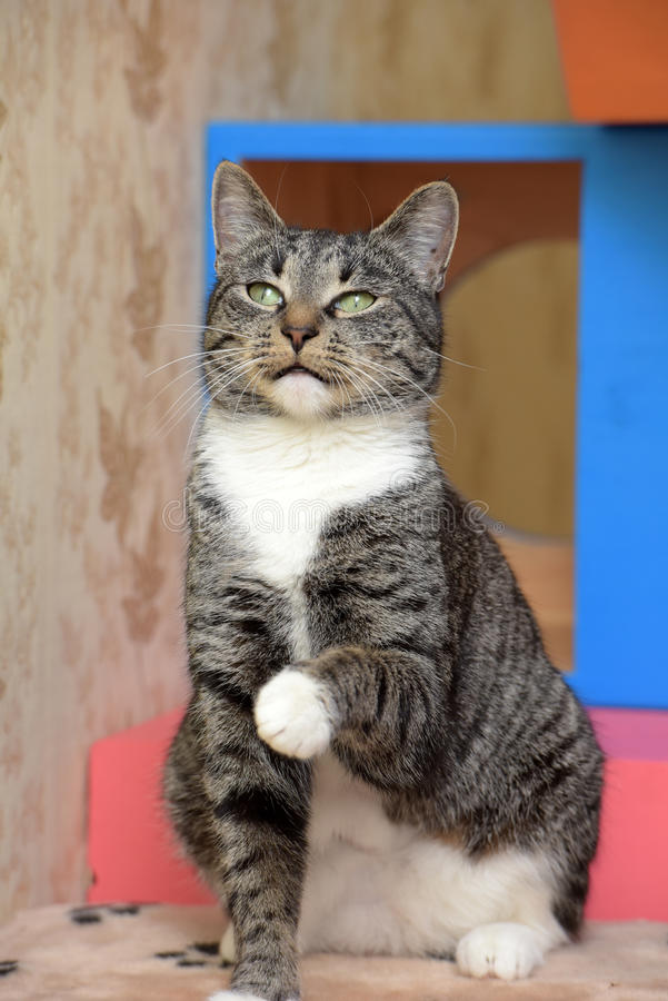 schöne grünäugige Katze stockbild