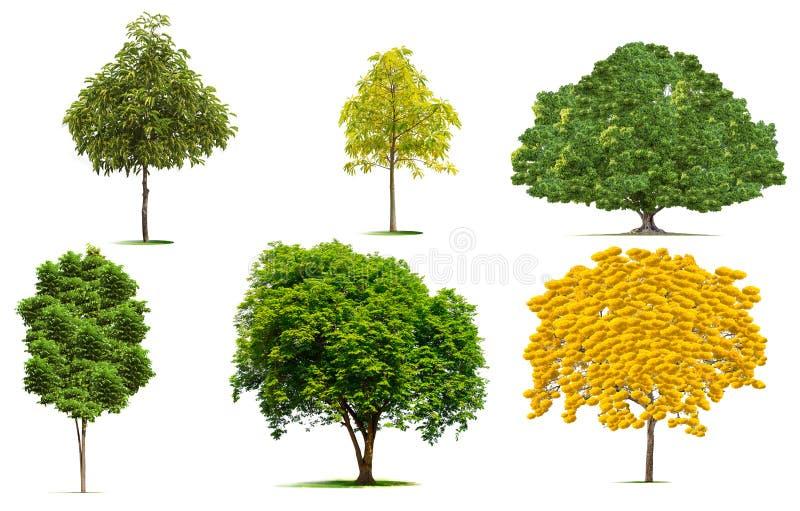 Schöne grüne Baumsammlung lizenzfreie stockfotografie