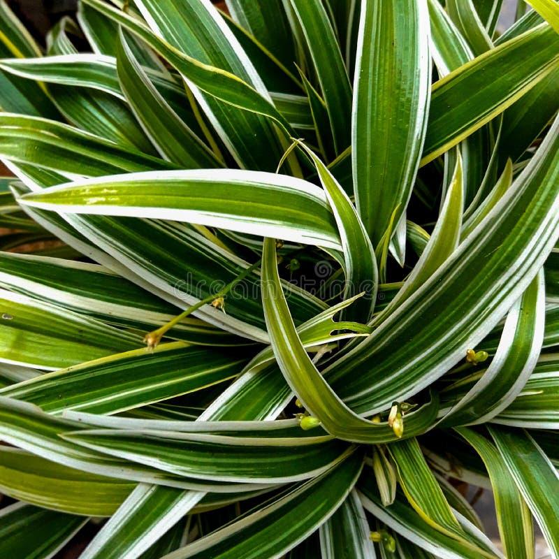 Schöne grüne Blätter für Hintergrund stockfoto