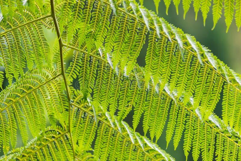 Schöne grüne Blattwand und -hintergrund stockfoto