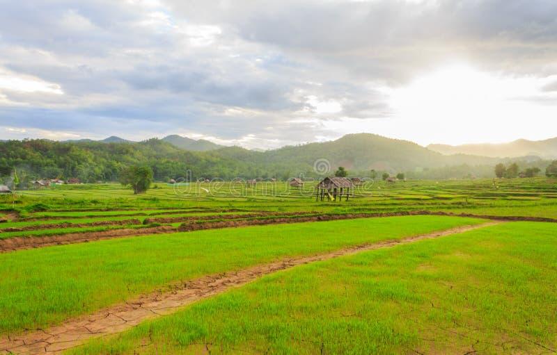 Schöne grüne Felder lizenzfreie stockfotografie