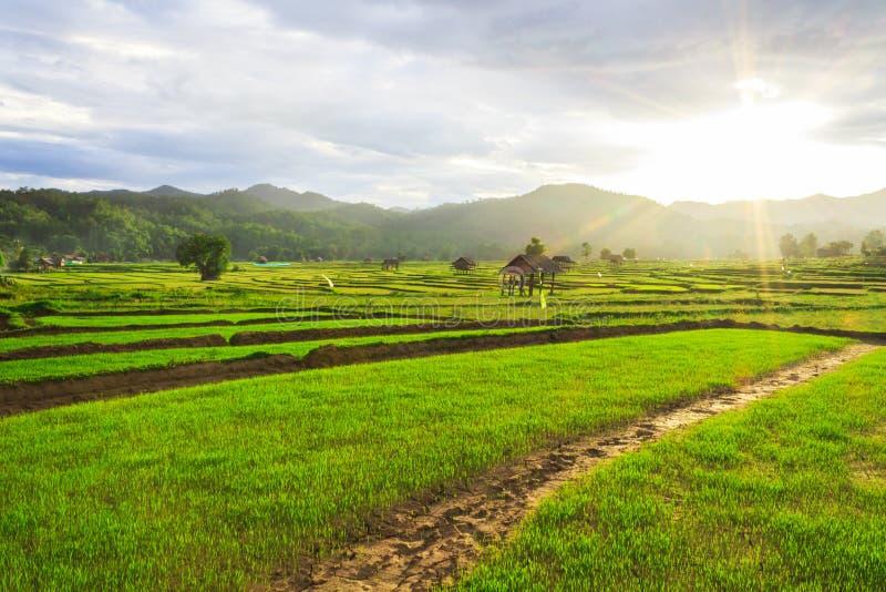 Schöne grüne Felder lizenzfreie stockfotos