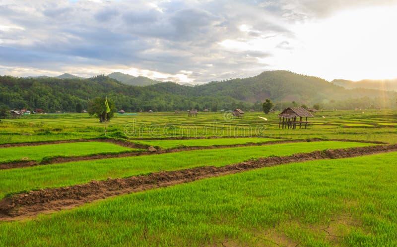 Schöne grüne Felder stockfoto