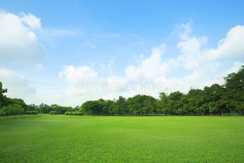 Schöne grüne Rasenfläche und frische Anlage in vibrierender Wiese AG stockbild