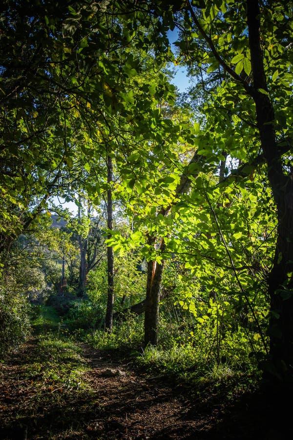 Schöne grüne Waldholzbahn mit Sonne strahlt Durchdringen durch aus stockbild