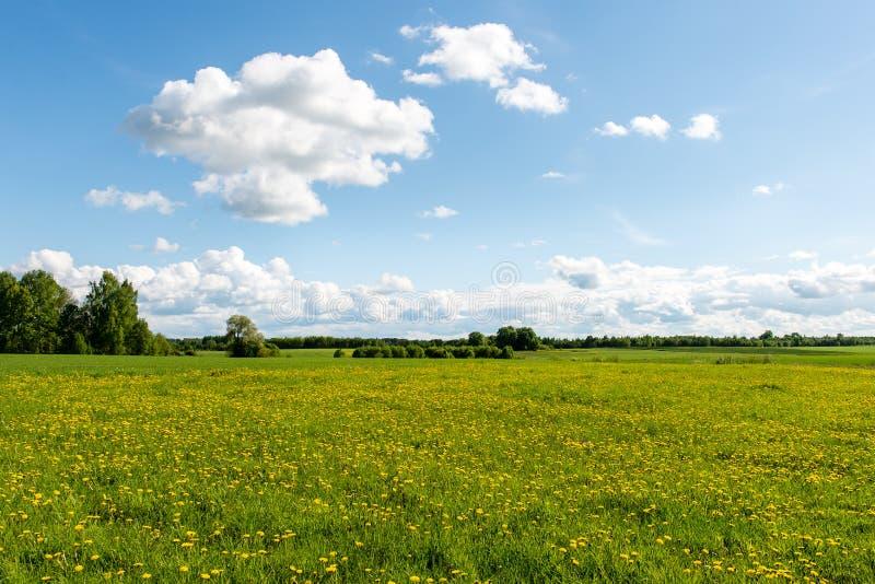 Schöne Grünfelder unter blauem Himmel im Sommer stockfoto