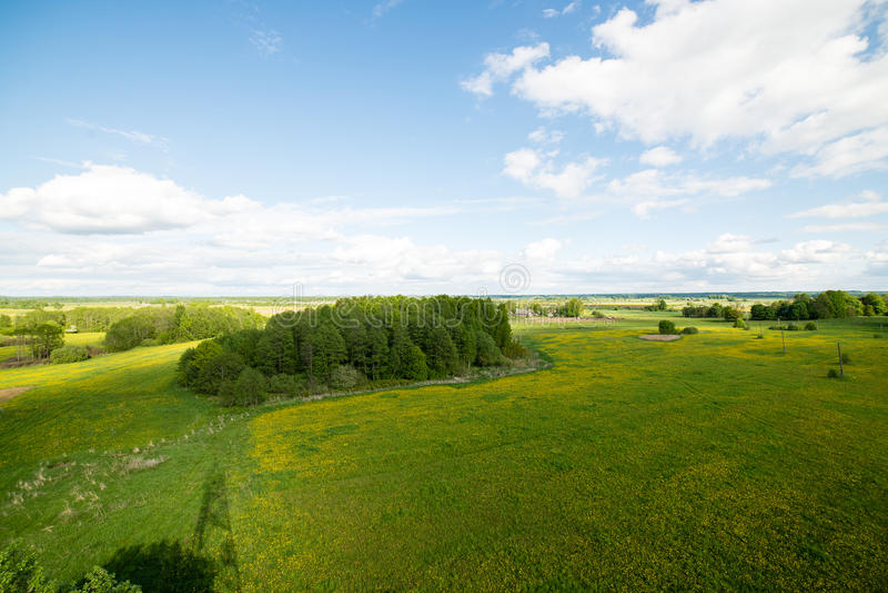 Schöne Grünfelder unter blauem Himmel im Sommer stockbild