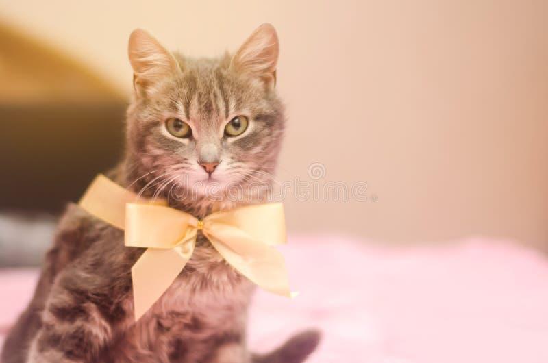 Schöne graue Katze der getigerten Katze mit einem gelben Bogenknoten lustiges Haustier Selektiver Fokus stockbilder