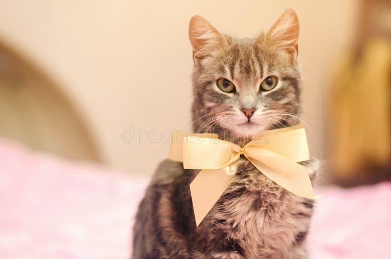 Schöne graue Katze der getigerten Katze mit einem gelben Bogenknoten lustiges Haustier Selektiver Fokus lizenzfreie stockfotografie