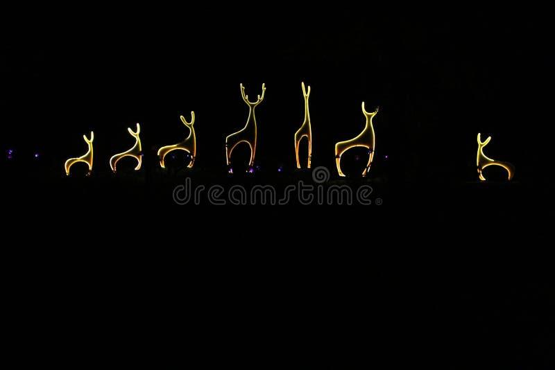 Schöne Gruppe Rotwild gemacht mit Licht in der Nacht zwischen Bäumen lizenzfreie stockfotografie
